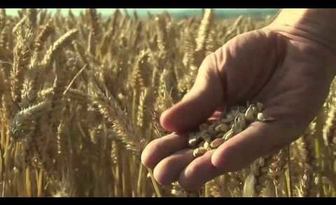 Food Matters- Official Trailer